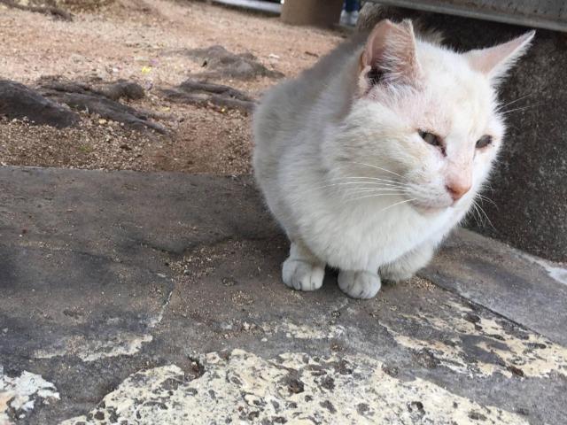 沖縄の街を散歩中に寄ってきた猫
