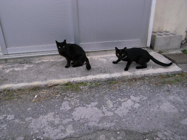 真栄原新町で見かけた猫