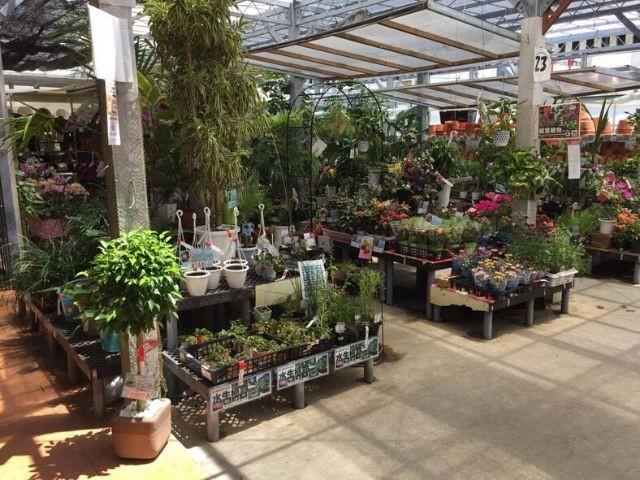 お気に入りのホームセンターの植物売り場