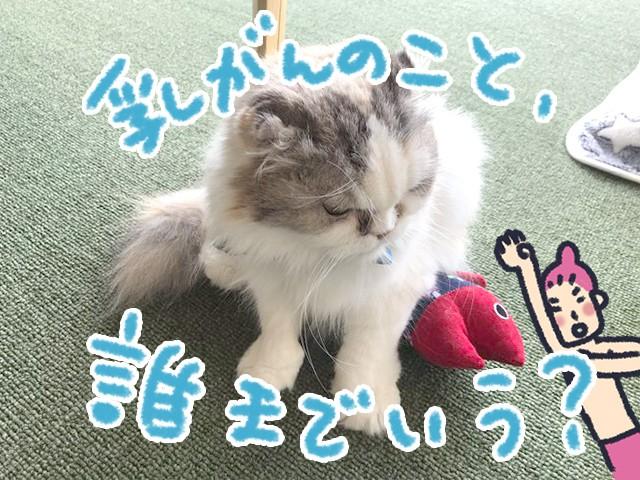 猫回に乱入するコヤナギ(イラスト・コヤナギユウ)