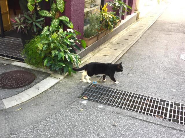 沖縄の街中で見かけた猫