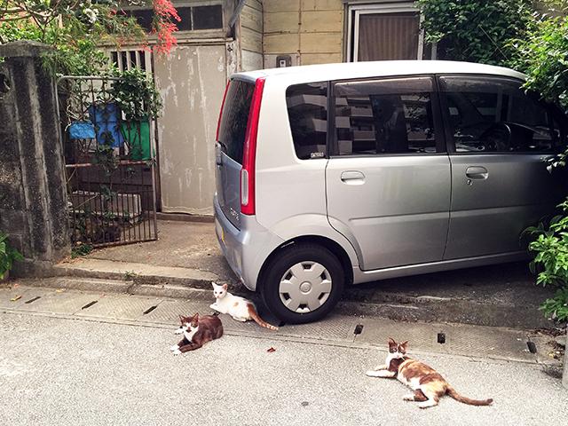 沖縄の街の路上に寝そべる猫たち