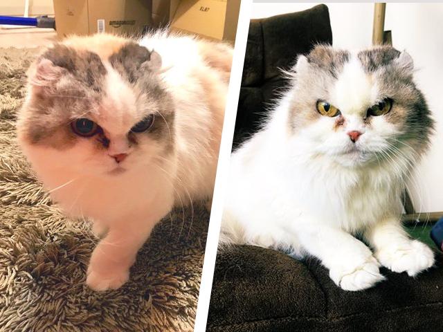 額の毛によって、同一猫とは思えない表情の変わりぶり