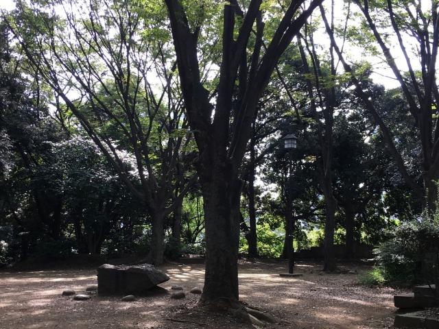 森の中を抜けた丘のてっぺんにある小さな広場