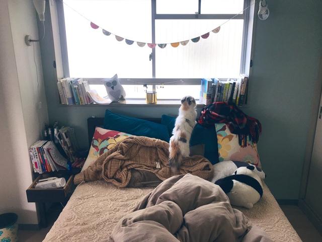 ベッドの上に飛び乗った! ジャンプするなんて!