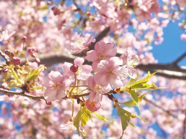 離婚の調停は桜の咲く頃だった