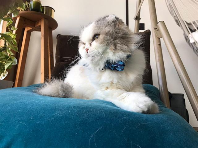 首輪をかけられた猫の様子