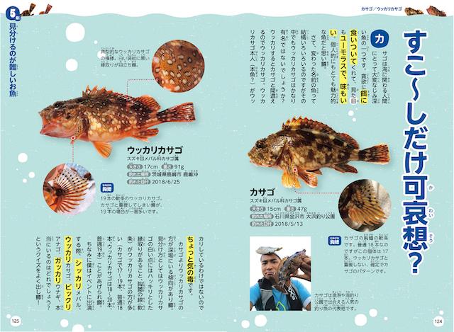 『日本一魚好きな芸人の魚図鑑』より(C)さかな芸人ハットリ/KADOKAWA